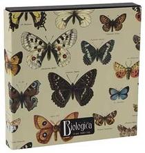 Sierschaal groot vlinder