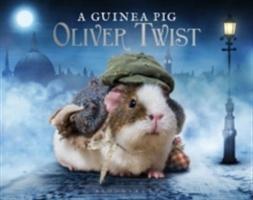 Guinea Pig Oliver Twist
