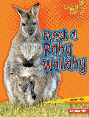 Meet a Baby Wallaby