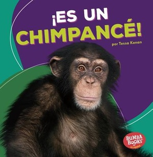 Es un chimpancé!/ It's a Chimpanzee!