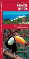Brazil Birds