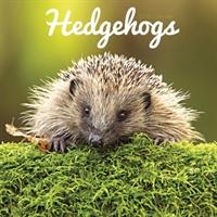 Hedgehogs W